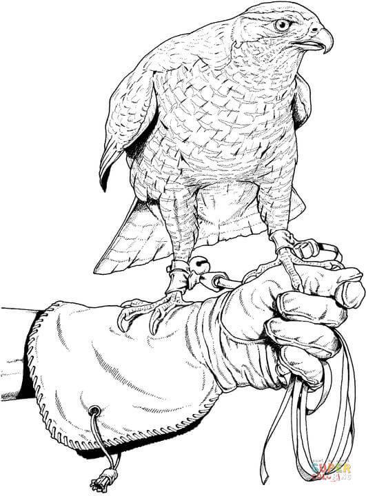 Peregrine Falcon clipart coloring Page the Click falcon coloring