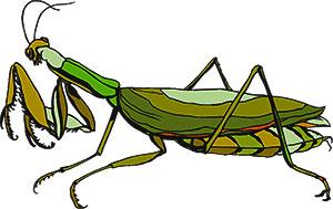 Praying Mantis clipart Fans 133 #13 mantis #13