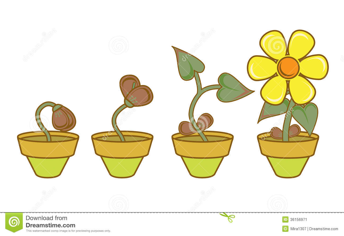 Plant clipart growing stage Pinterest  And Clip Pinterest