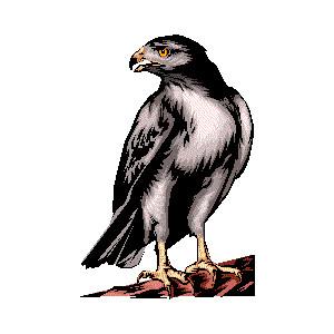 Falcon clipart hawk #7
