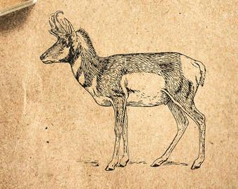 Pronghorn Antelope clipart Etsy Antelope 2 Pronghorn 2