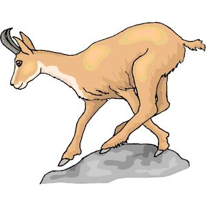 Pronghorn Antelope clipart Svg svg drawings Pronghorn svg