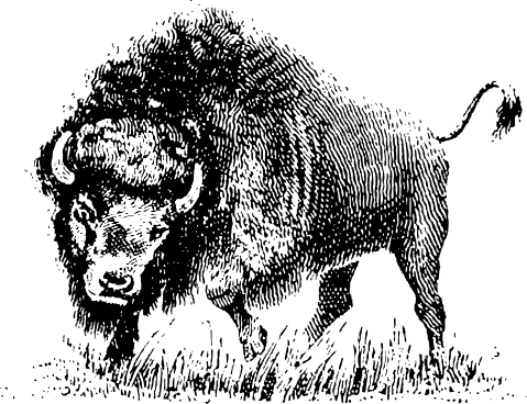 Bison clipart black and white Images of 1 Buffalo Free