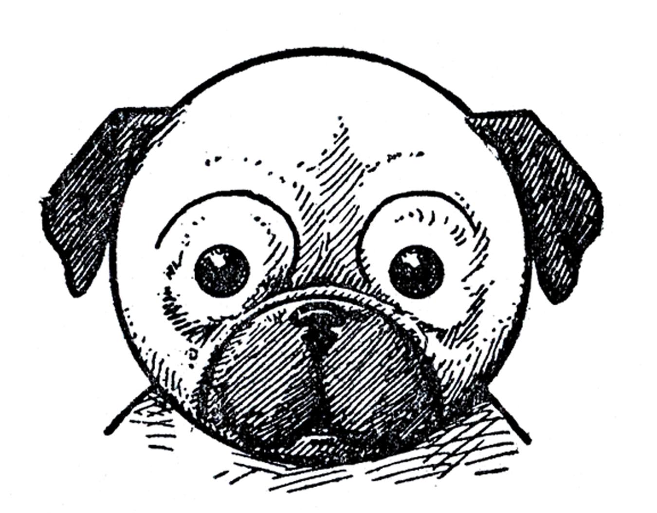 Drawn pug black and white Graphics Pug Fairy – Kids