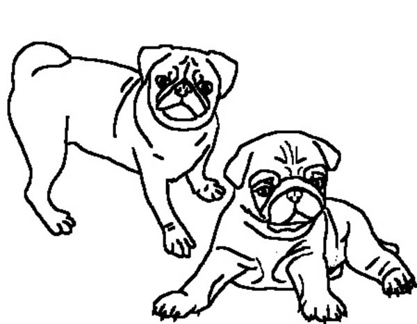 Drawn pug color Coloring Coloring ClipArt ClipArt Best