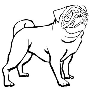 Drawn pug outline Zone Outline Black Cliparts Cliparts