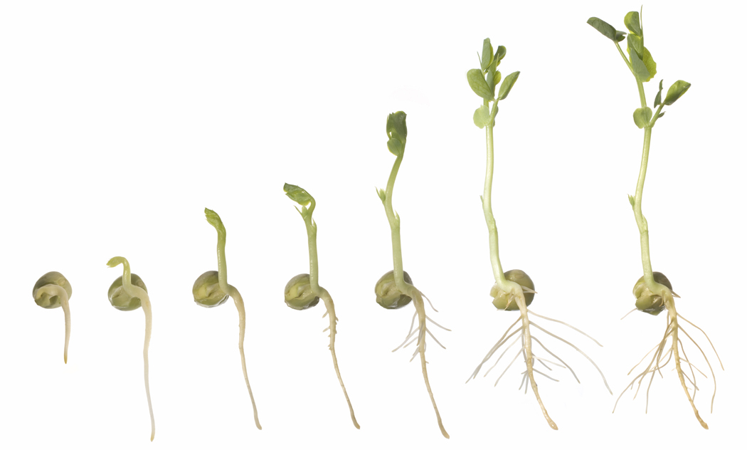 Seeds clipart seed germination Enjoy science enjoy  Seed