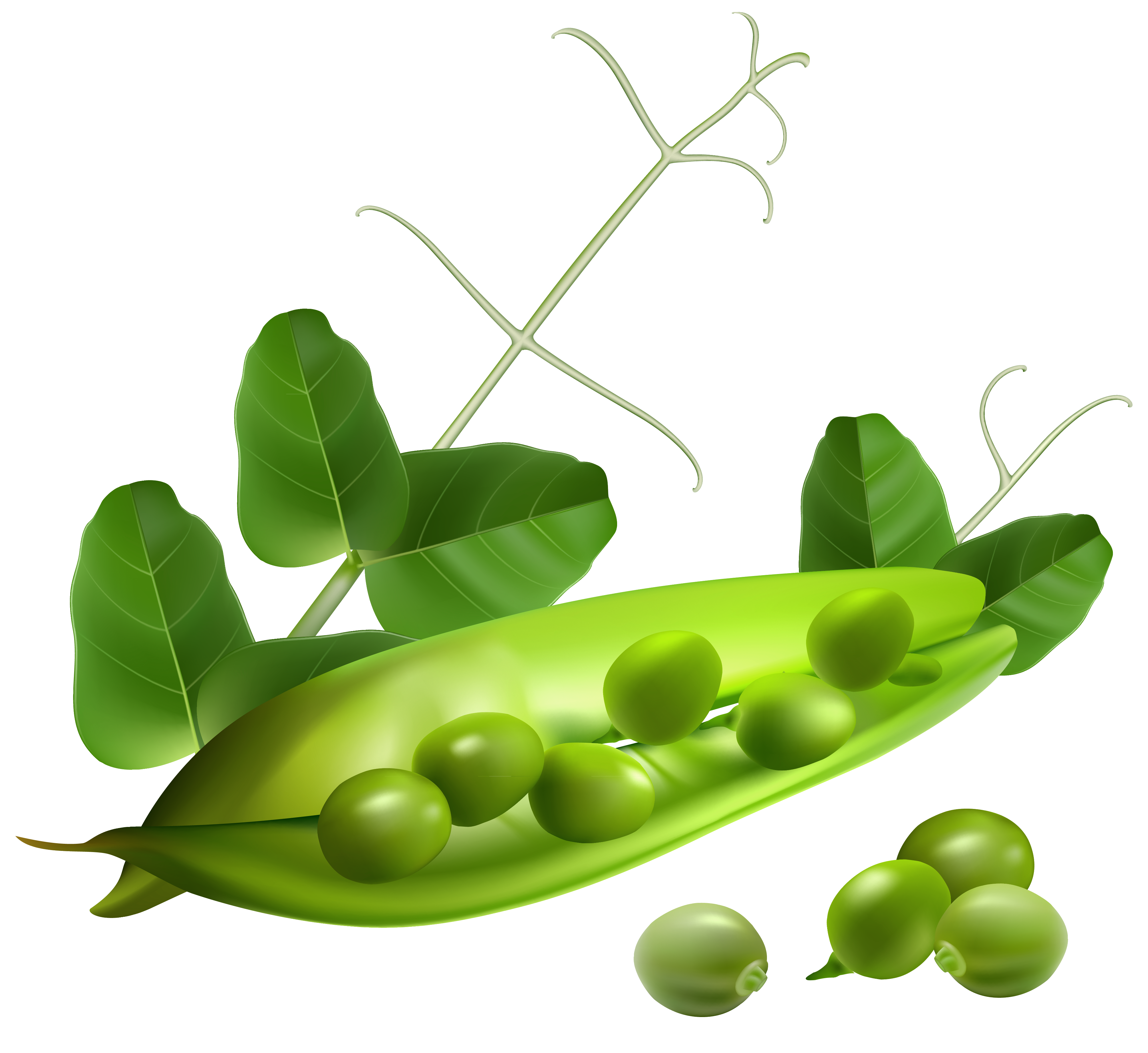 Pea clipart single Pea images free PNG download