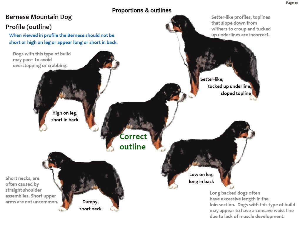 Bernese Mountain Dog clipart head Download Bernese Mountain #15 Mountain