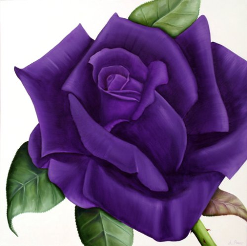 Purple Rose clipart Purple Purple Others and Rose