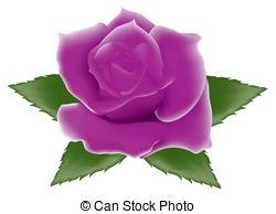 Purple Rose clipart Purple Art  vector Graphics