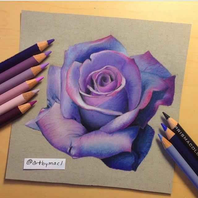Drawn lavender Artbymacl by Violet rose Color