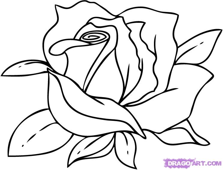 Drawn red rose black and white step by step Cartoon  Clip Free on