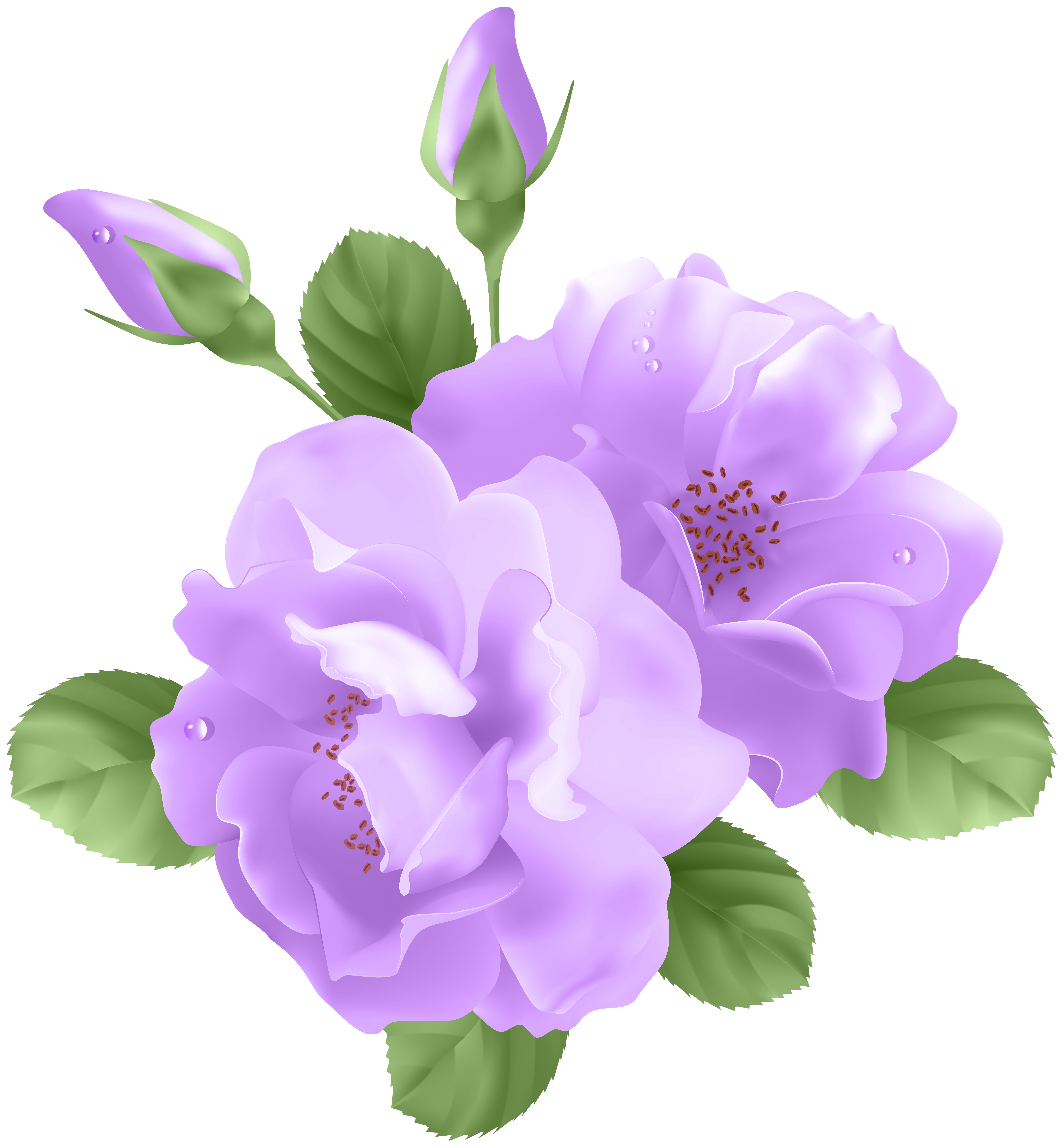 Morning Glory clipart lavender Art Purple full PNG View