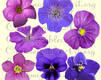 Buttercup clipart african violet Purple Rose Violet Pink Images