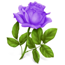 Purple Rose clipart love #6