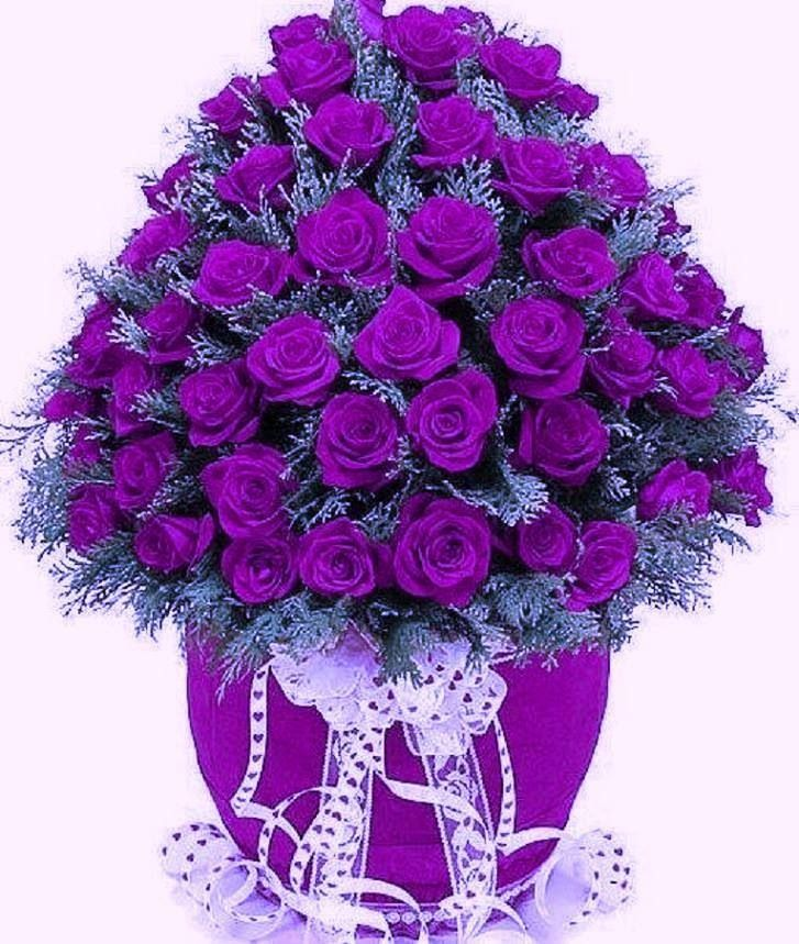 Purple Rose clipart love #10