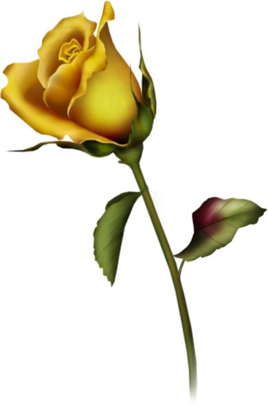 Yellow Flower clipart single flower 25+ Bud Gallery Free on