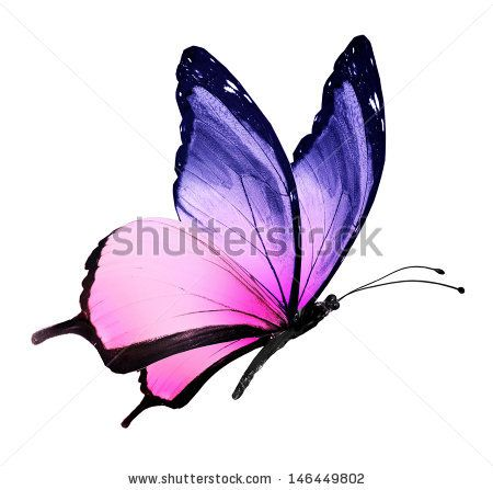 Blue Rose clipart colorful flying butterfly Purple the Butterfly and pink