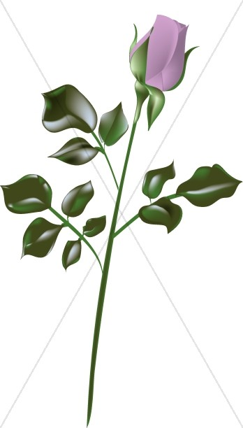Yellow Rose clipart long stem #7