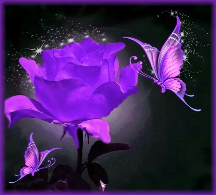 Purple Rose clipart small butterfly #13