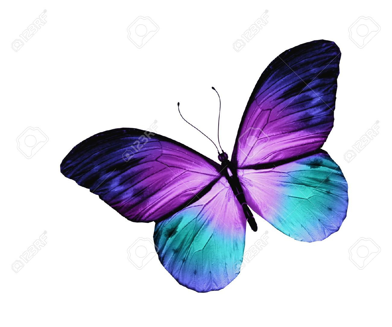 Purple Rose clipart small butterfly #8