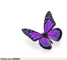 Purple Rose clipart small butterfly #7