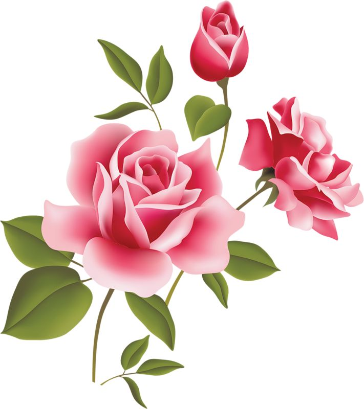 Pink Rose clipart pink gold Pink Pink Art Clipart on