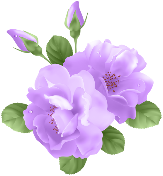 Purple Rose clipart transparent background Clip Transparent Transparent Purple Gallery