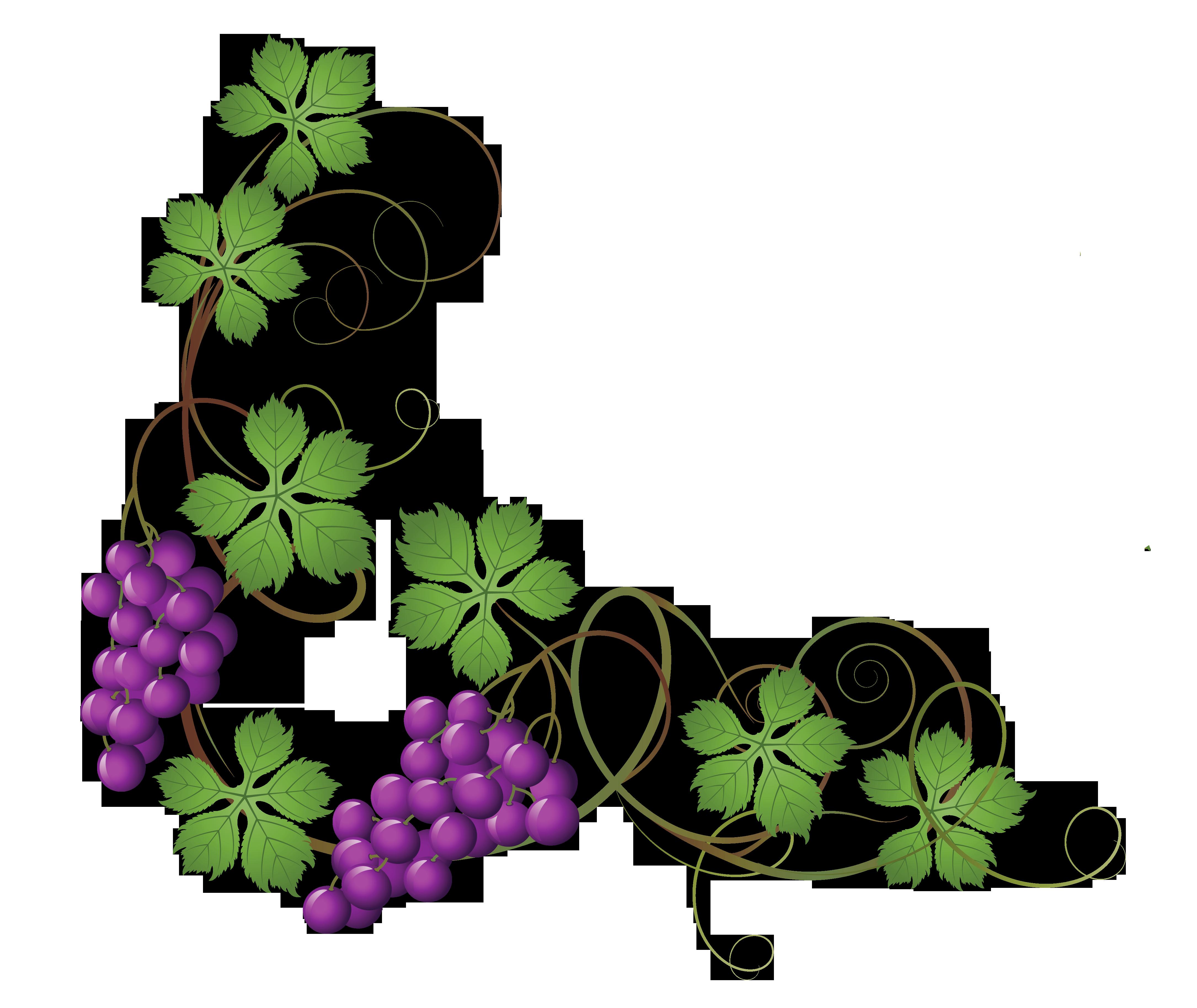 Decoration clipart vine Size Picture Gallery Decoration Vine