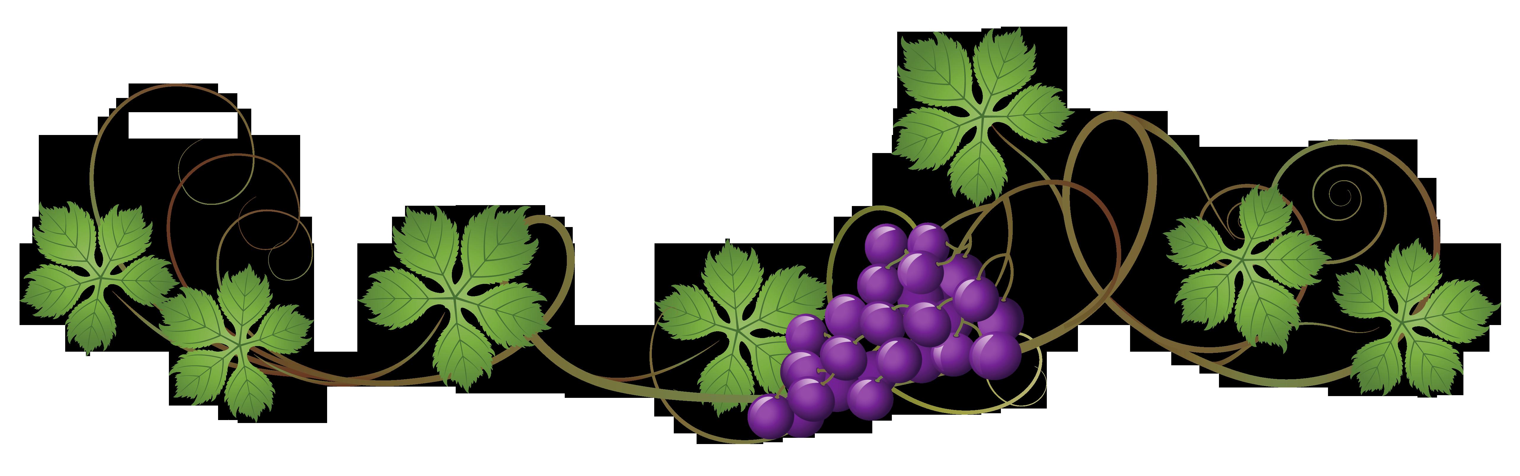 Decoration clipart vine Vine Yopriceville High Clipart PNG