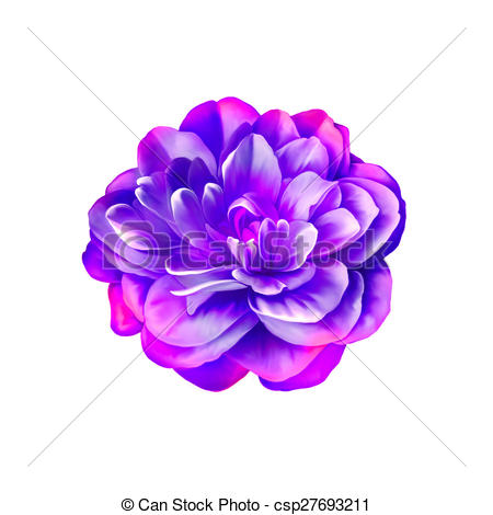 Purple Rose clipart violet #11
