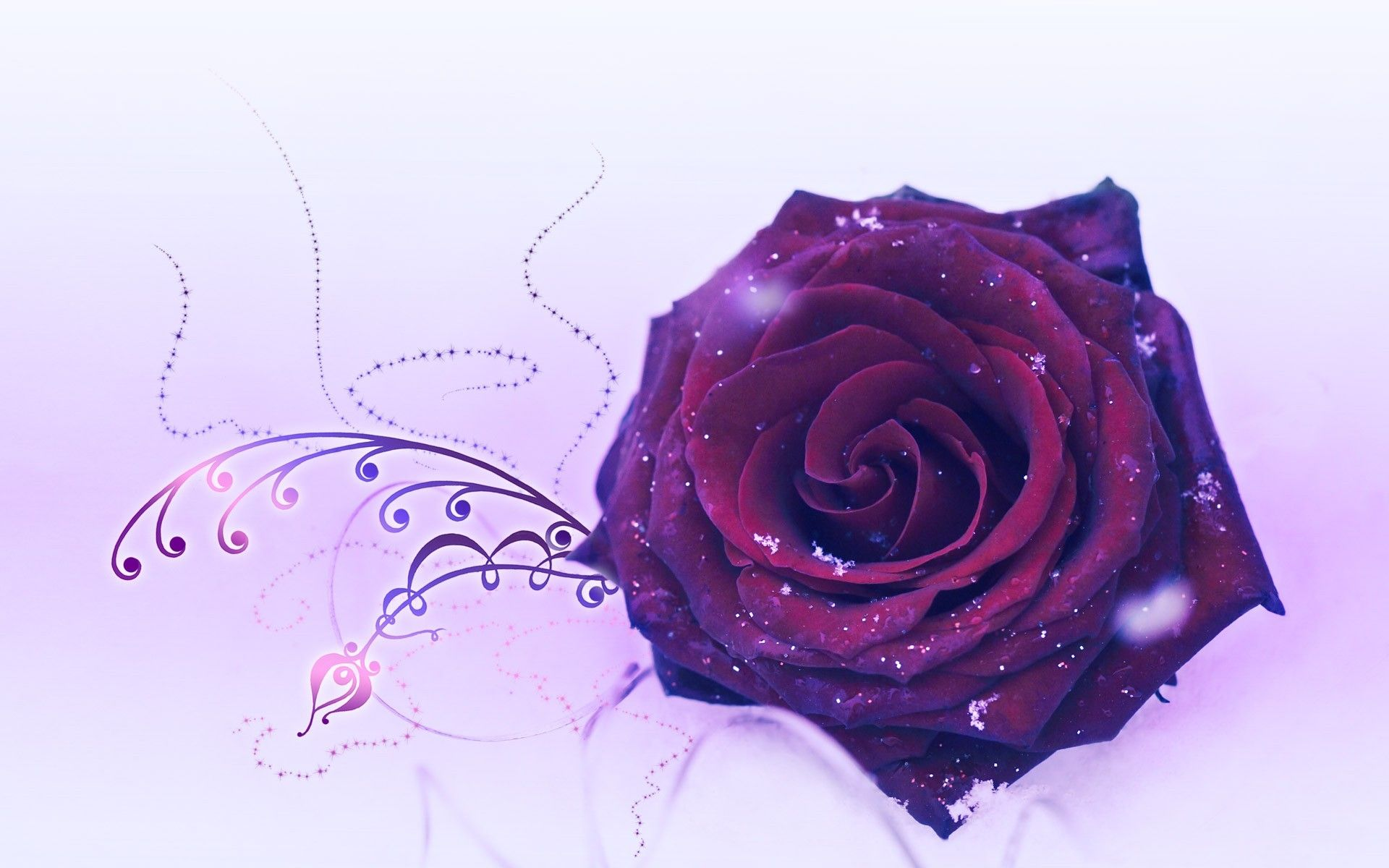 Purple Rose clipart wallpaper Onypen Other : Wallpapers Wallpaper