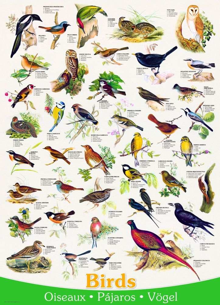 Puzzle clipart bird Piece by Puzzle (1000 by