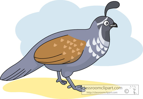 Quail clipart Kb 50 for Results