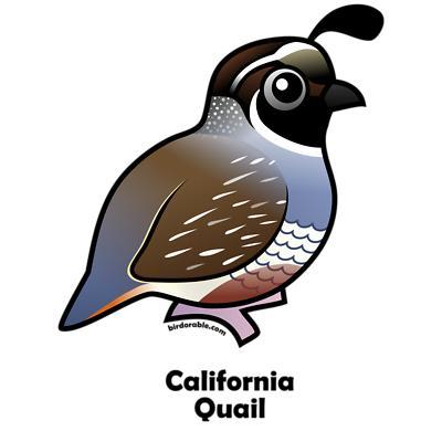 Quail clipart Free Clipart Best #2066