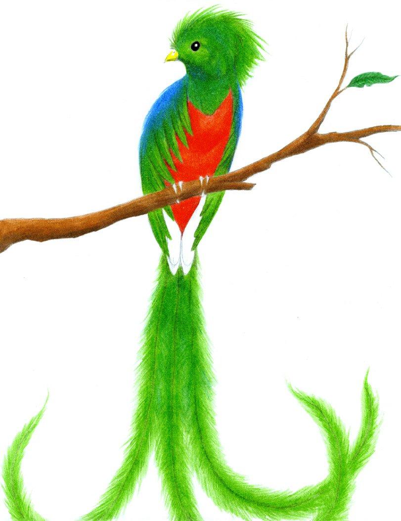 Quetzal  clipart Art Quetzal Bird Clip Clipart