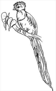 Quetzal  clipart Photos Free quetzal Clipart Images