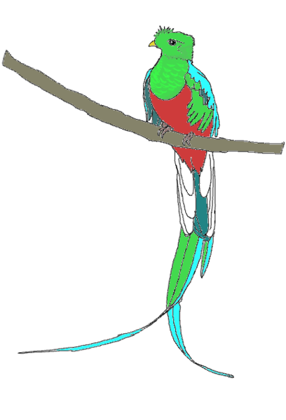 Quetzal  clipart Com this  image as: