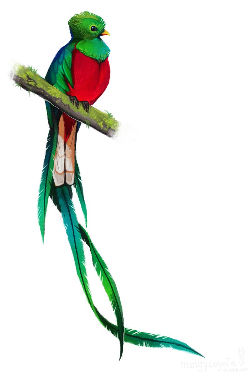 Quetzal  clipart Would bird stencil tattoo Buscar