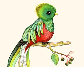 Quetzal  clipart Guatemala Of Guatemala Guatemala clipart