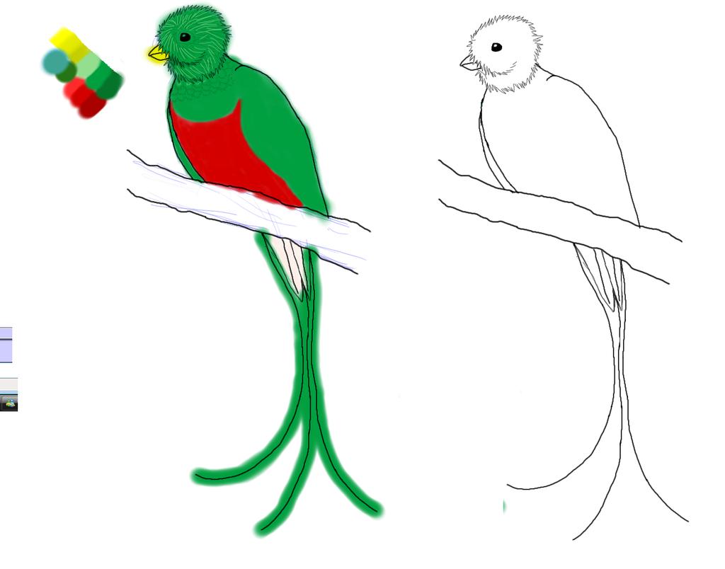 Drawn rainforest quetzal Quetzal Quetzal Guatemala Guatemala clipart