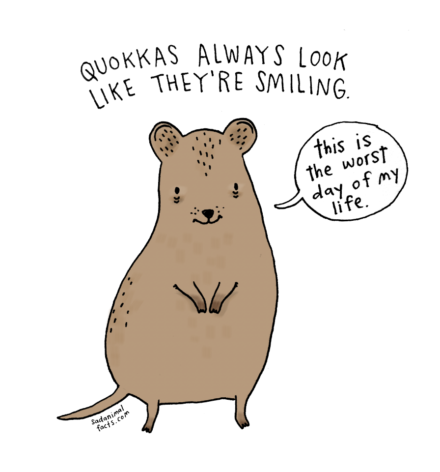 Quokka clipart  Animal Image Facts Tee