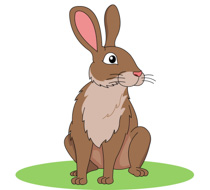 Rabbit clipart #1