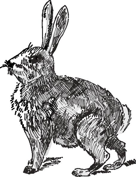 Rabbit clipart wild rabbit #10