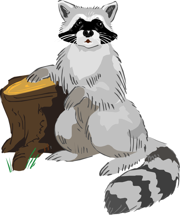 Raccoon clipart Clipart 12933 Clip Free Image