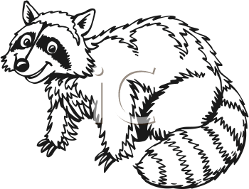 Drawn raccoon clipart White Black Illustration Raccoon Vector