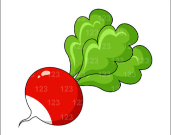 Radish clipart Clipart radish%20clipart Panda Clipart Images