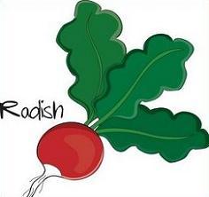 Radish clipart Radish Plants Radish Free Clipart
