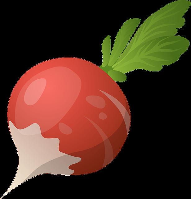 Radish clipart turnip Organic Max Food Pixel Free